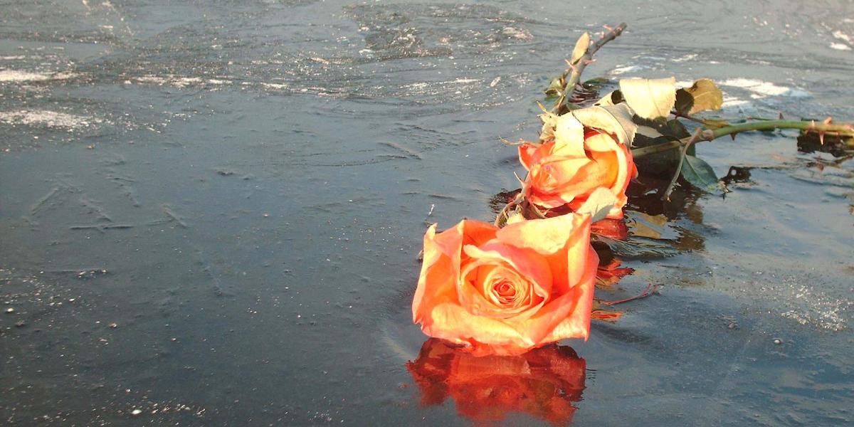 Frozen rose on lake ice